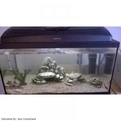 Akvaarium kandiline Aqua 4 Home PAP 60